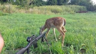 Download Best Hunting/Gun Fails Compilation Video