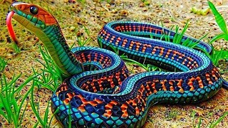 Download 10 Most Beautiful Snakes In The World Video