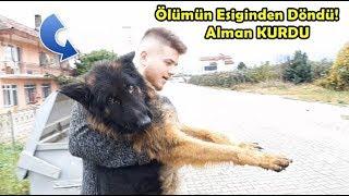 Download Aç Susuz Bırakılp Ölüme Terkedilen Yeni Köpeğim - ALMAN KURDU Video
