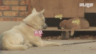Download 세상 모르고 자고있는 이 아이는 내 친아들이 아닙니다 l Dog Becomes A Father For A Sick Puppy From His Friend Video