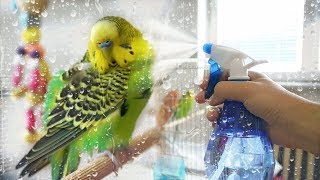 Download How to Give Your Budgie a Bath | Learn All About Video