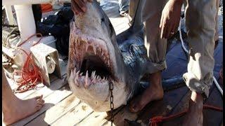 Download Alerte : les requins attaquent ! Video