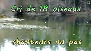 Download Chants d'Oiseaux de France : cris d'oiseaux Video