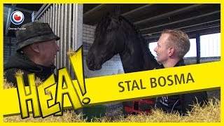 Download HEA! Stal Bosma Video