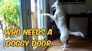Download Who Needs a Doggy Door? Video