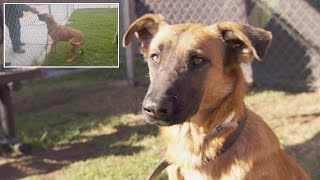 Download Dog Thrilled To See Owners At Shelter But They're There To Adopt Different Dog Video