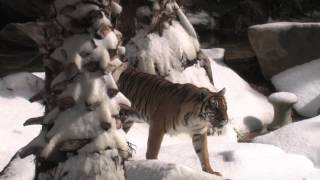 Download Snow Days at the Los Angeles Zoo Video