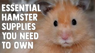 Download Essential Supplies You Need For A Hamster! Video