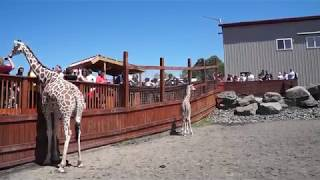 Download April and Taj from Animal Adventure Park Video