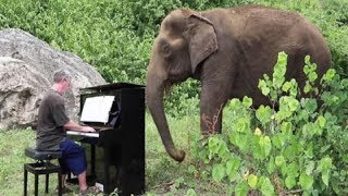 Download Elderly Elephant Starts Crying When Man Plays Piano For Her Video