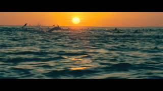 Download DisneyNature: Oceans - Trailer Video
