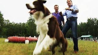 Download Hundeerziehung: Nie wieder gespannte Leinen! Video