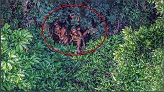 Download Phát hiện bộ lạc bí ẩn trong rừng Amazon Video