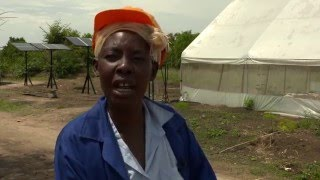 Download The renewable power of green skills for women in Zambia Video