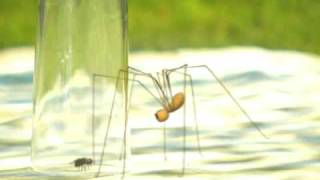 Download Funny spider! Video