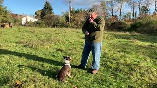 Download Training: Teaching Bud To Stay Video