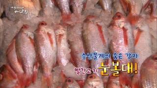 Download 생선구이의 강자, '붉은물고기' 눈볼대와 홍감펭 [어영차바다야] Video