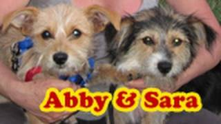 Download Dog rescue: Sara & Abby (Please share and help us find them a loving forever home) Video