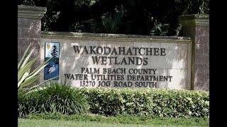 Download Wakodahatchee Wetlands named best park in Florida Video
