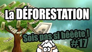 Download La DÉFORESTATION - Sois pas si bêêête #17 Video