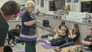 Download Lemoore FFA students learn responsibility through extensive guide dog training Video