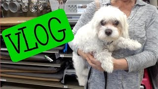 Download Vlog: Instant Pot Meal Prep, PetCo with Tybee, Skin Care| Dr Dray Video