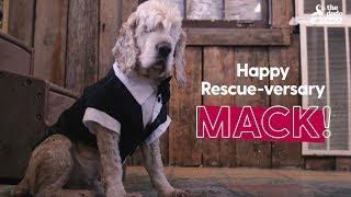 Download Blind Dog Gets BEST Rescue Party Ever   The Dodo: PARTY ANIMALS Video