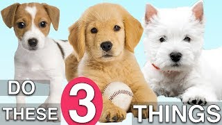 Download Do These 3 Things To Train Your NEW PUPPY Fast! Video