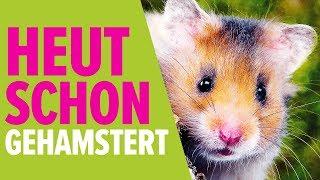 Download Heut schon gehamstert? | NORBERT ZAJAC | Zoo Zajac, Duisburg Video