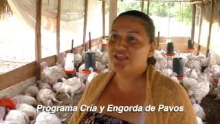 Download Programa Cría y Engorda de Pavos Video