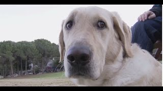 Download It's a Dog's Life at Technion - Seeing Eye Guide Dogs and Puppies on campus Video