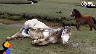 Download Baby Horse Refuses To Leave Injured Mom's Side | The Dodo Video