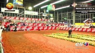 Download FERIA DE LAS FLORES DIA 2 PASO FINO COLOMBIANO Video