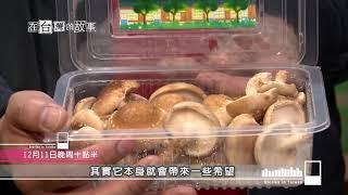 Download 【在台灣的故事】一頓午餐改變全台灣 第923集 20181211節目預告 Video