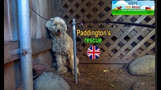 Download Paddington - homeless and lonely... can you help him? Video