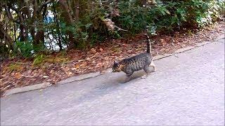Download 通勤型猫ひばり43 散歩についてきたのに、リードしたがる。 Video