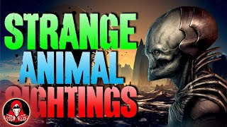 Download 15 UNEXPLAINED Animal Sightings - Darkness Prevails Video
