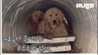 Download ″지난 여름까지만해도 사람 보면 좋아하던 애들이었거든요..″ ㅣ ″We, Dogs, Loved Humans, But Now..″ Video