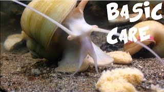 Download apple snail care Video