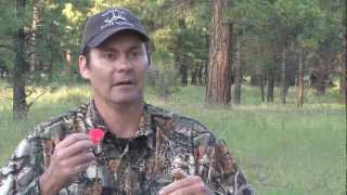 Download Elk Calling- Tips on Cow Calls with Steve Chappell Video