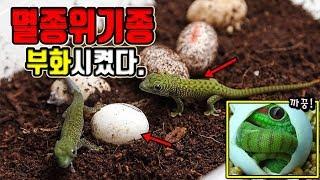 Download 세계멸종위기종 ″번식성공″ 그는 대체..생물책...? [정브르] Video