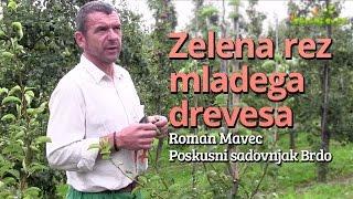 Download Zelena rez mladega drevesa Video