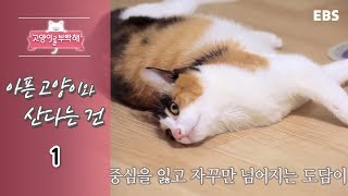 Download 고양이를 부탁해 - 아픈 고양이와 산다는 건 #001 Video