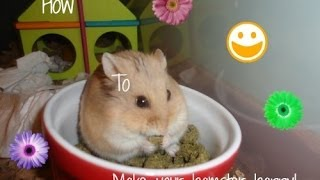 Download 10 ways to make your hamster happy! Video