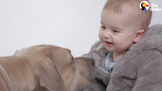 Download Kids Meet Pitbulls For The First Time | The Dodo Video