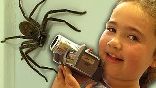Download Big Spider Nerf Gun Dyson DC39 Vacuum Capture Kids React Slowmo Study Video