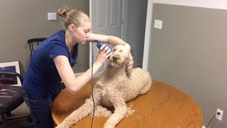 Download TAKING CARE OF MY SERVICE DOG!!! (6.12.15) Video