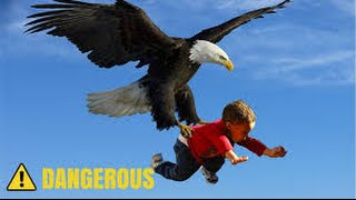 Download Eagle Attack Eagle vs Snake, Goat, Man, Wolf النسر يقاتل الافعى والذئب والمعزة والانسان Video