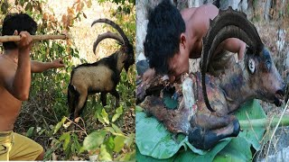 Download adventure in forest - Bezoar Ibex Hunting end cooking Eating delicious Video