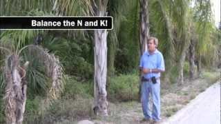 Download Nutritional Deficiencies in Palms Video
